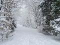 12-Wow, wat een sneeuw. We pakken de slee uit de schuur.